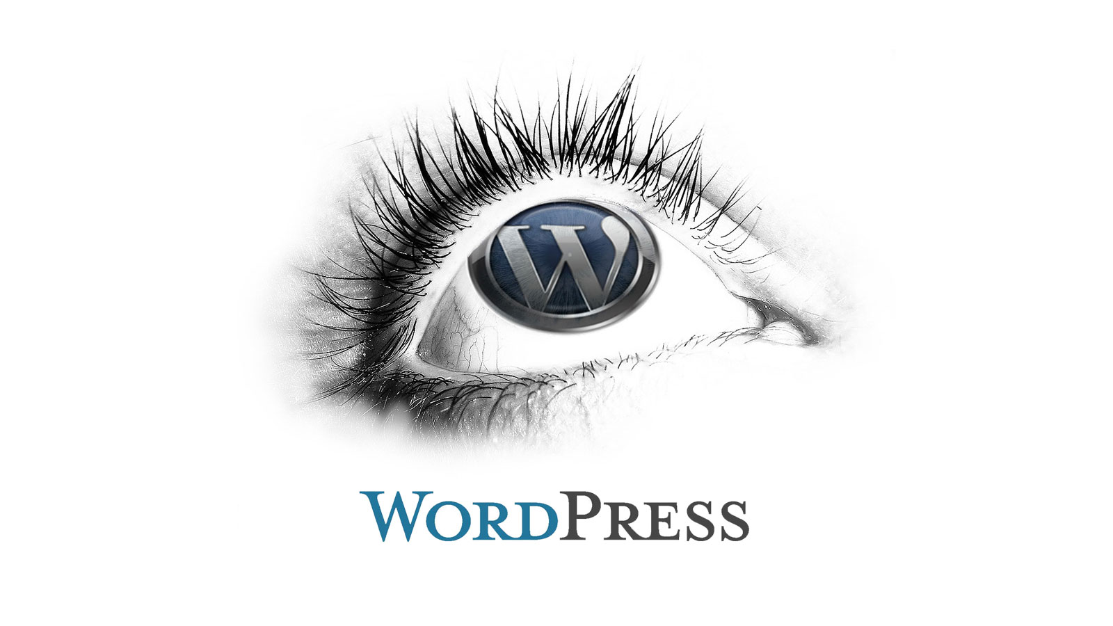 Things to Look for in a New WordPress Theme